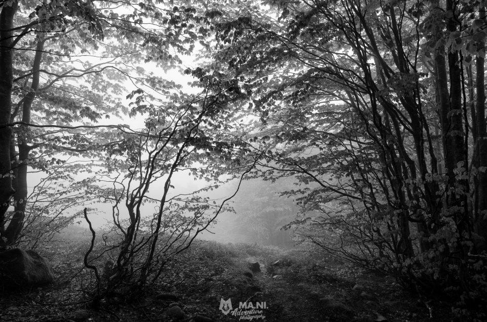 Il bosco ed i suoi misteri