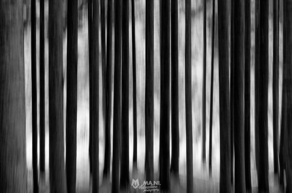 Perdersi nel bosco