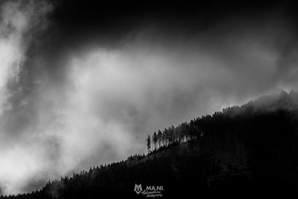 Una linea di conifere controluce avvolte nelle nuvole