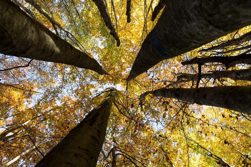 Adoro sdraiarmi per terra e guardare gli alberi dal basso.