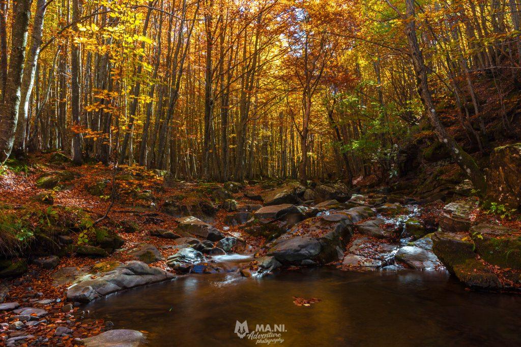 Il bosco in autunno ha una magia unica.