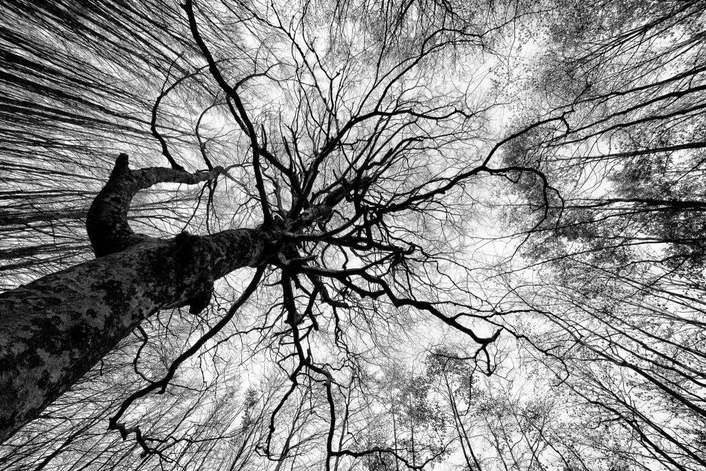 Treeline un flim prodotto da Patagonia che celebra le foreste
