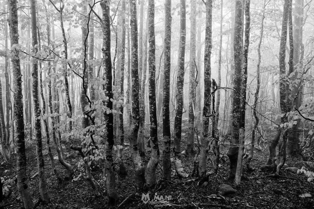 Treeline, che cos'è un albero?