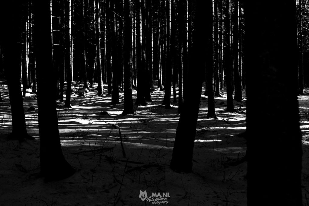 La luce radente dell'inverno disegna ombre intriganti nel bosco.