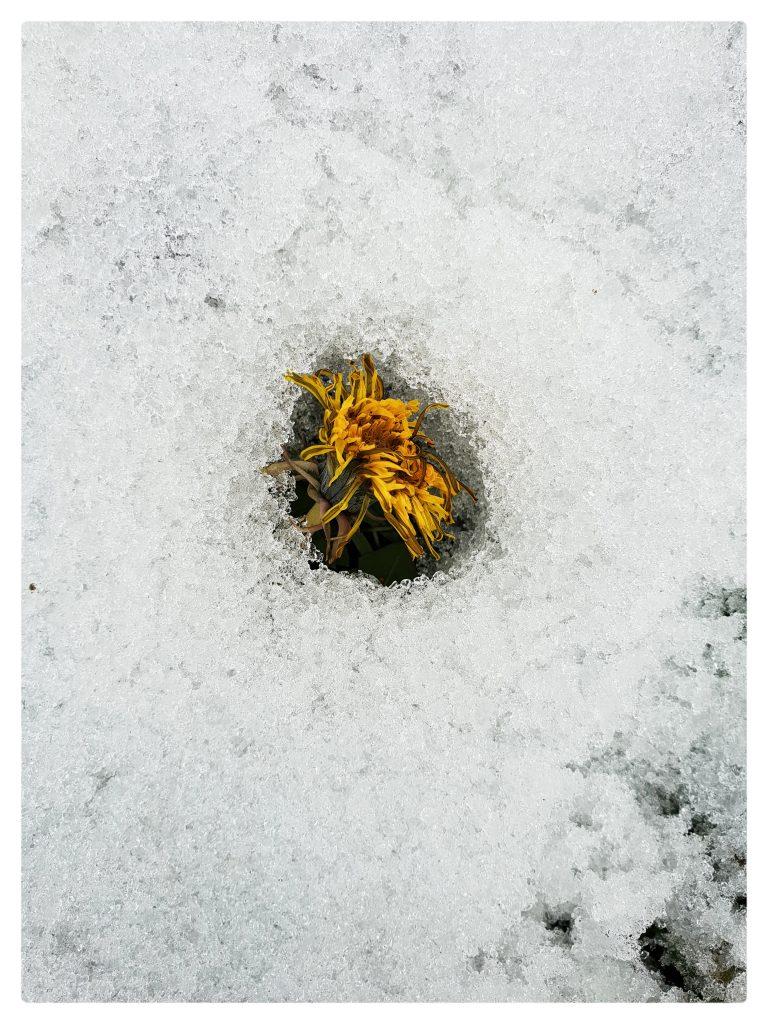 Le forme e le sostanze che la neve assume sono le più disparate.