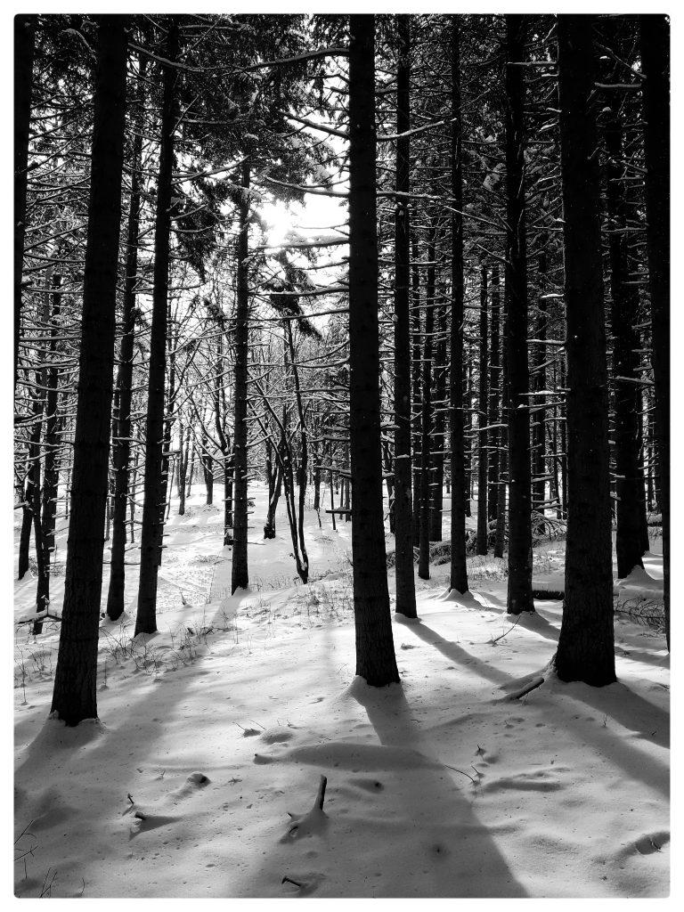 Il bosco in inverno racconta magia e conserva segreti.