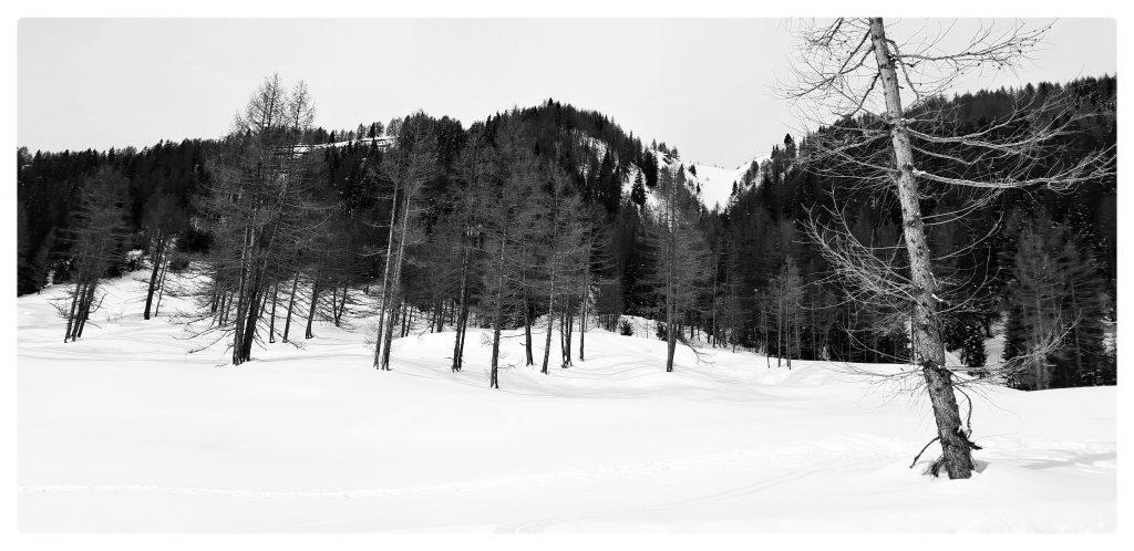La neve è caduta. I giorni sono passati. Quel morbido tappeto bianco che si è depositato lentamente cambia forma.