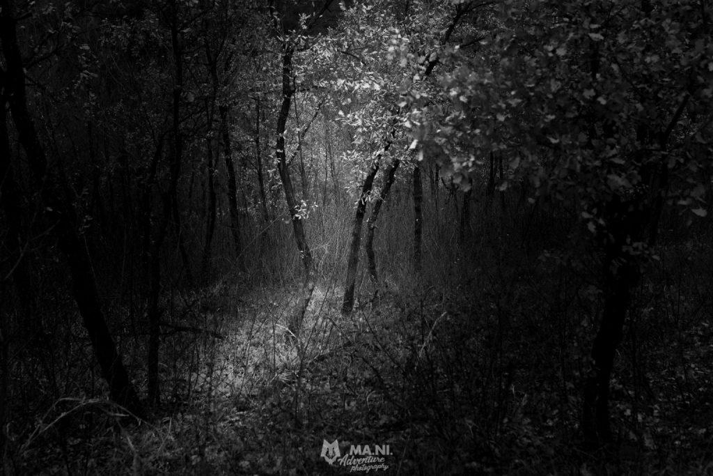 Treeline nel mezzo di un bosco di querce completamente secco.