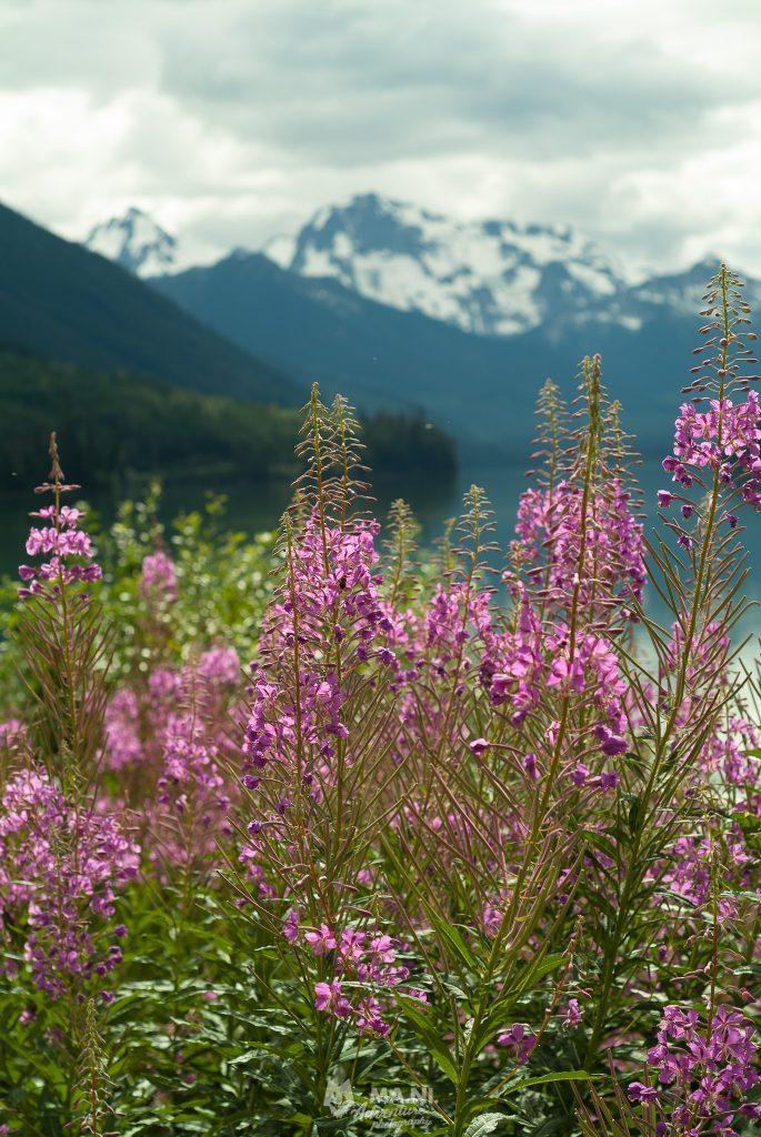 Le piante abbondano durante la stagione estiva