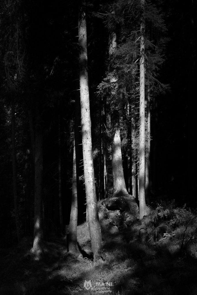 I boschi del Regno dei Fanes.