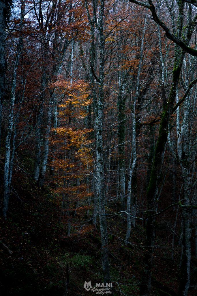 Monte Penna, nei pressi del Santuario della Verna, il foliage è un lontano ricordo.