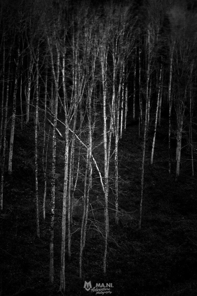 Parco Nazionale delle Foreste Casentinesi, faggi agitati dal vento.