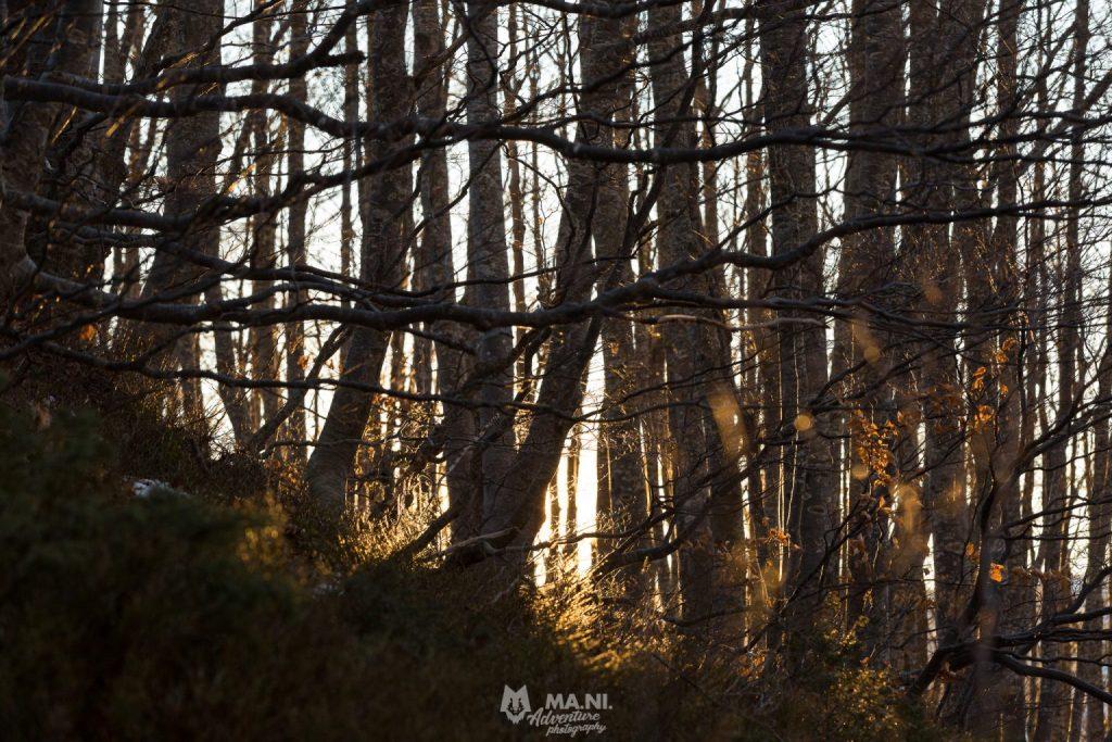 I primi raggi del sole invernale si fanno strada nel bosco