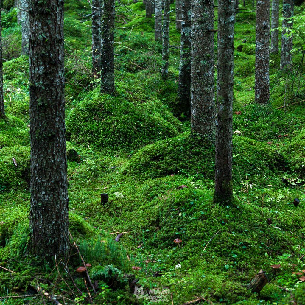 Il tripudio di verdi nel bosco bagnato