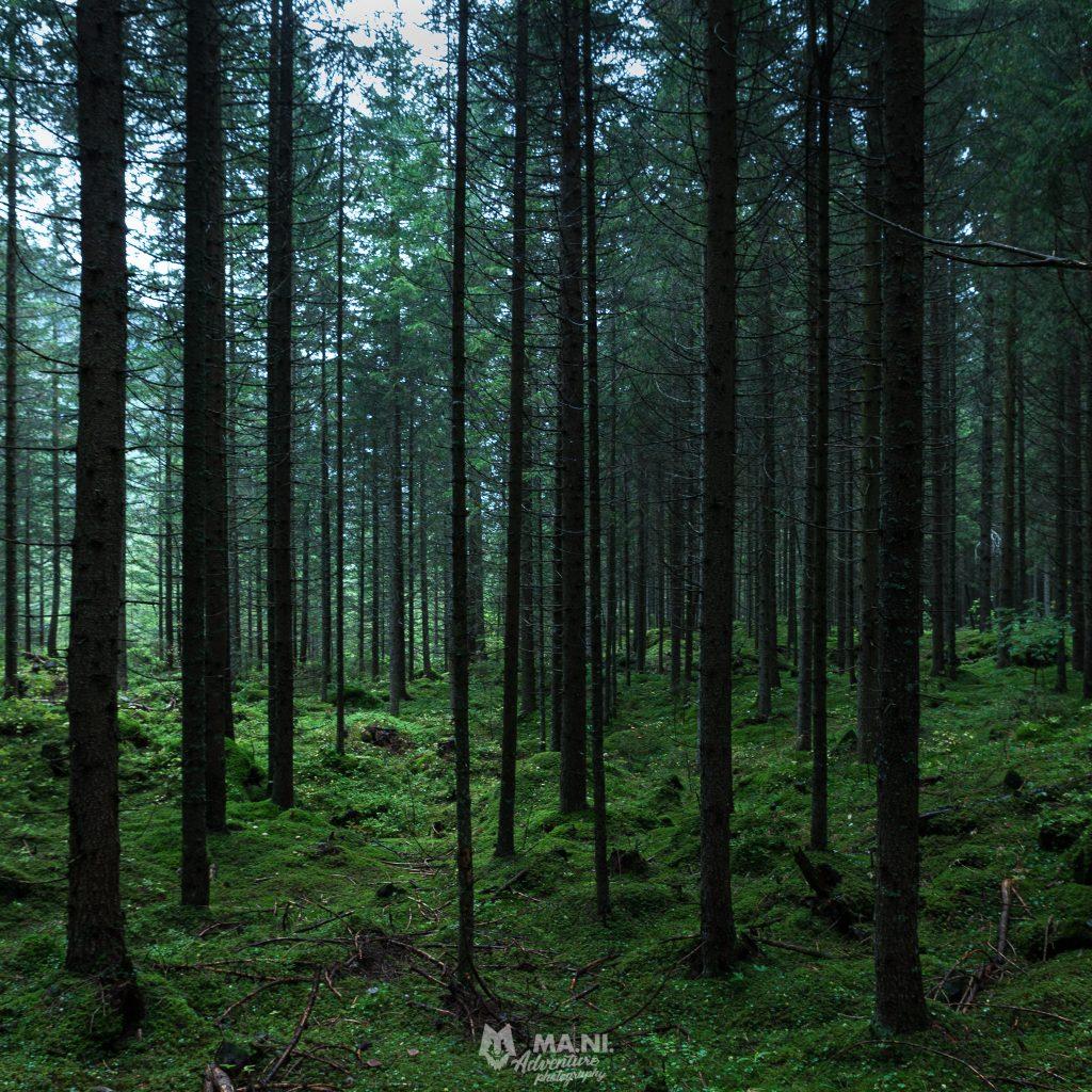Il bosco anche durante una giornata di pioggia è in grado di fornire ottimi spunti