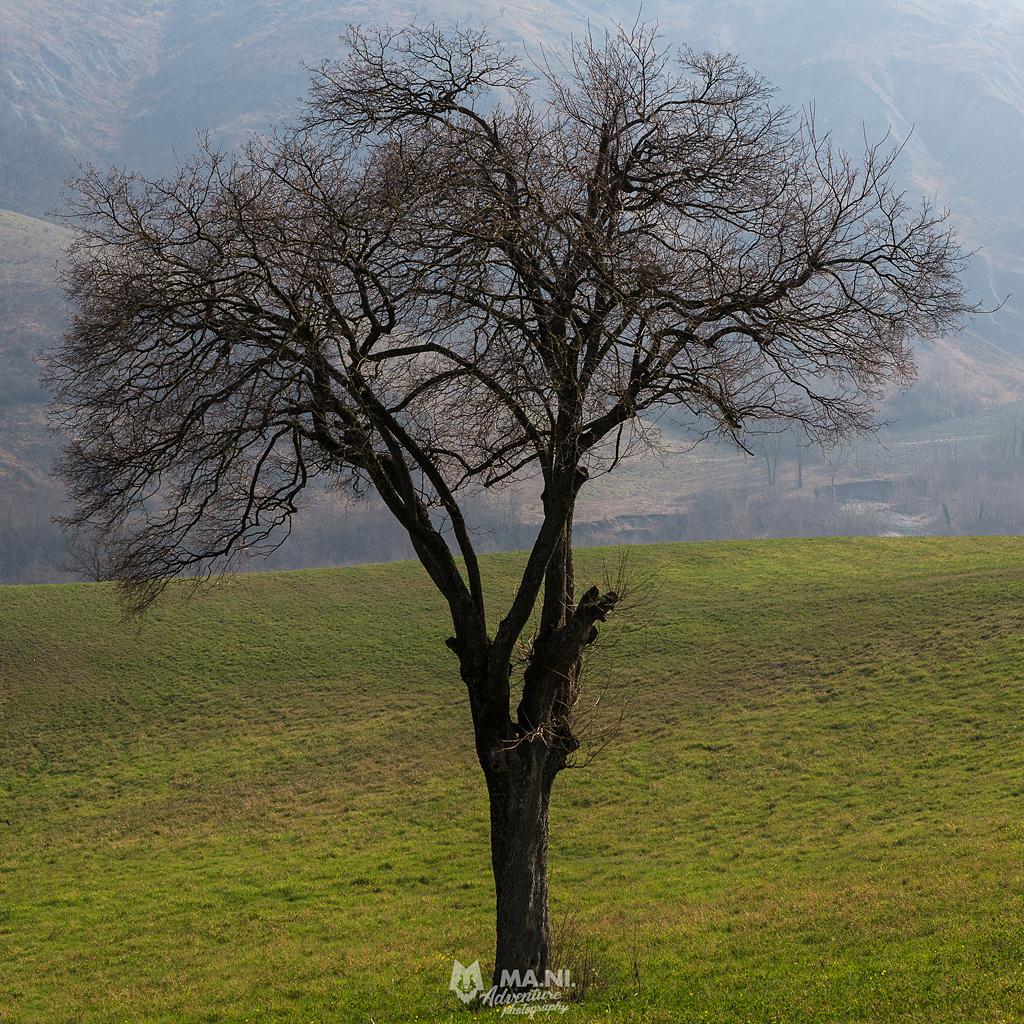 Tanto più un albero è solitario quanto più è in armonia con quello che lo circonda