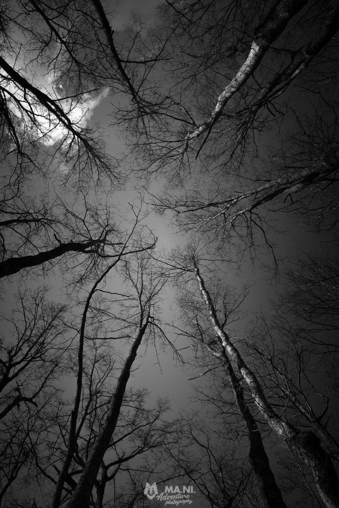 All'inizio della primavera il cielo è ancora visibile dall'interno dei boschi