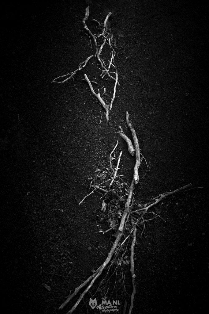 Verso il monte Nuda resti di arbusti