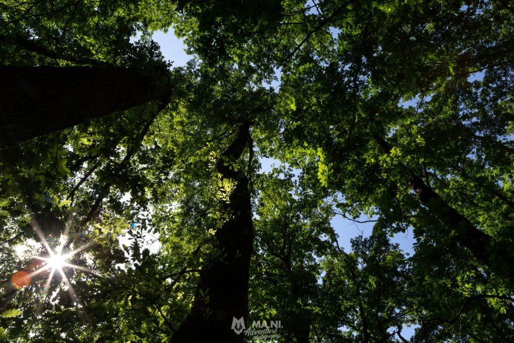 Un soffitto di querce