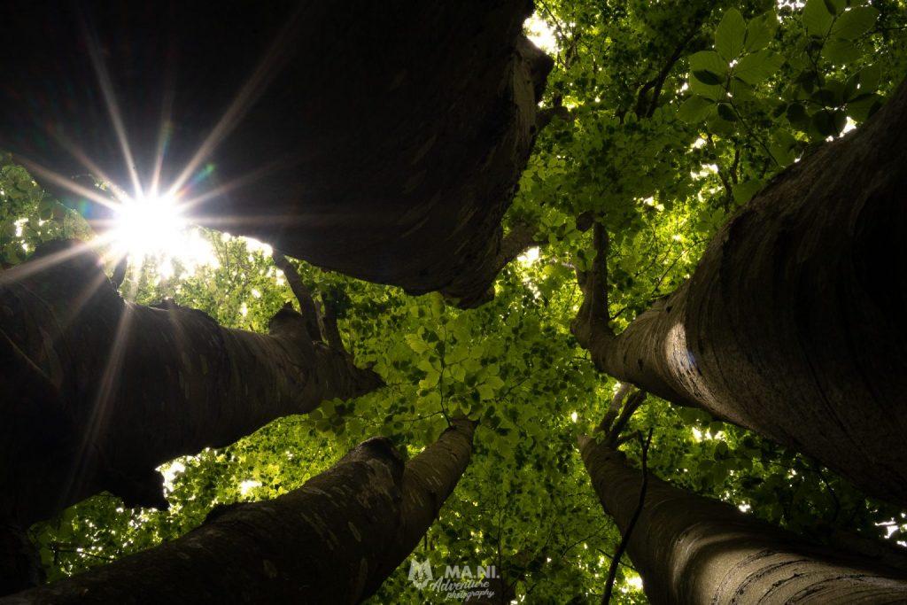 Il soffitto che preferisco è quello delle chiome degli alberi