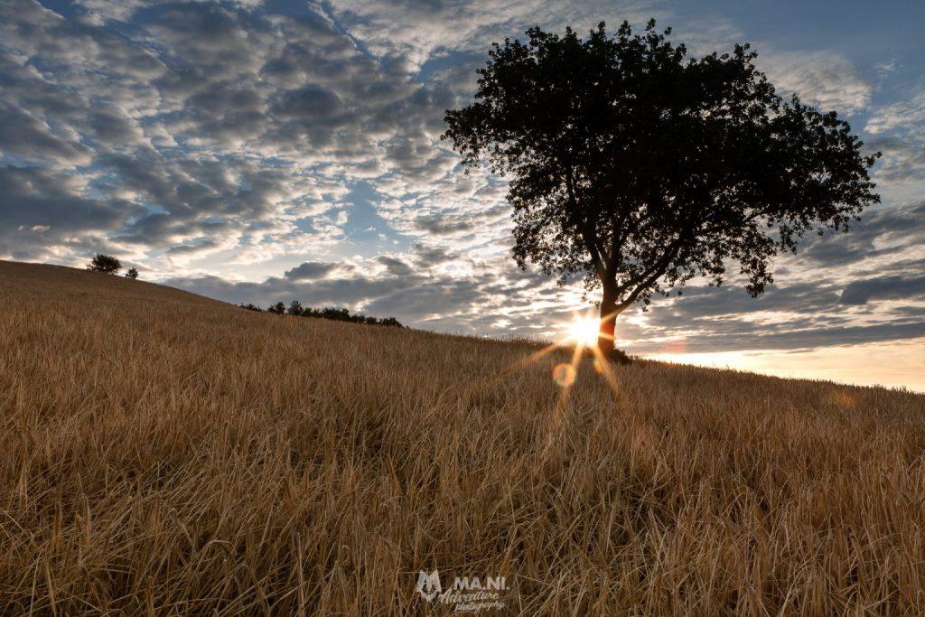 Durante il solstizio il sole fa capolino dietro una collina illuminando i campi di grano