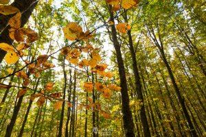 I colori caldi del bosco in autunno