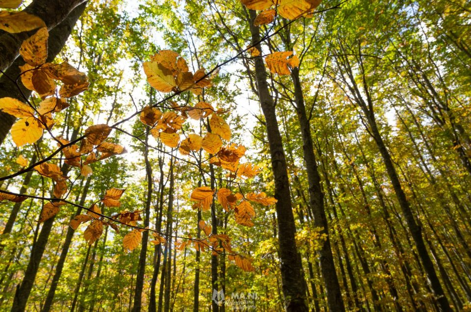 Un autunno diverso