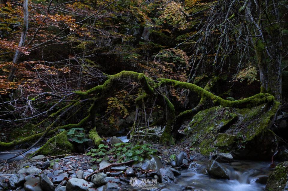 Accesso alla natura: why not?