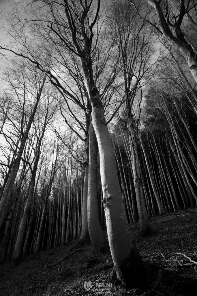 Una parte importante della mia Natura è rappresentata dal bosco