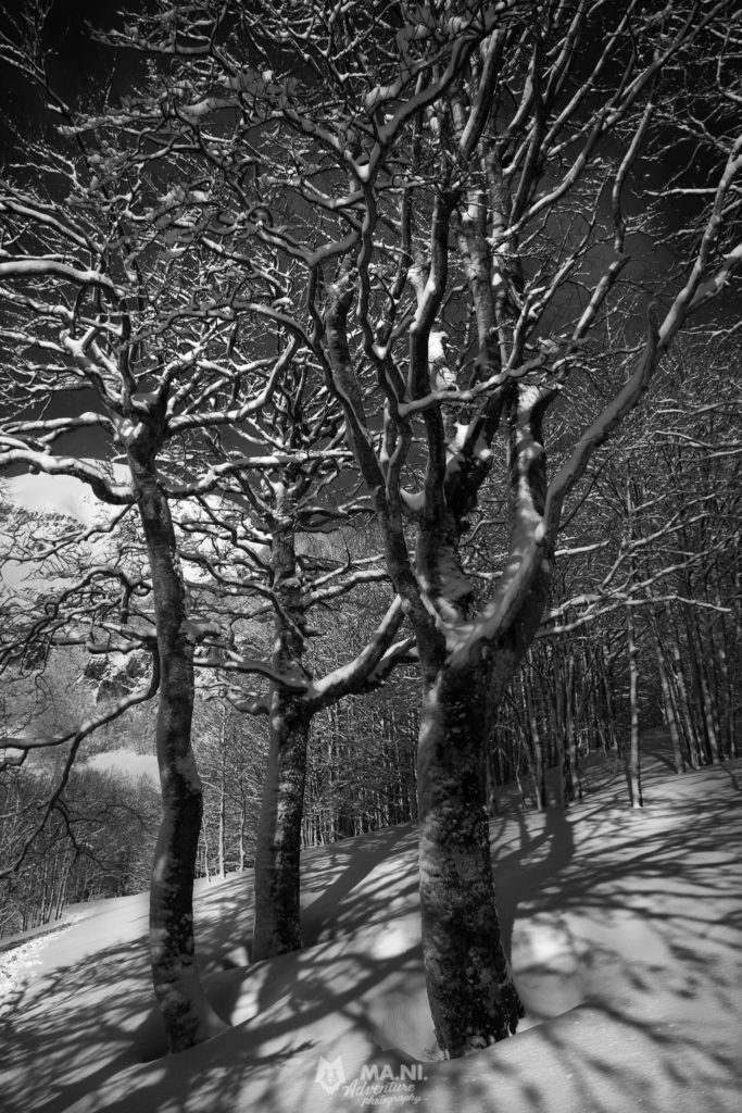 La neve che ricopre il bosco in inverno crea un'atmosfera magica