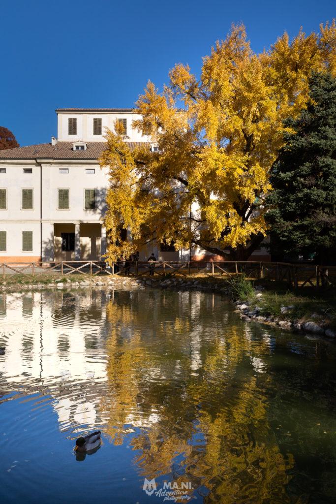 Formigine, Villa Gandini ed i famosissimi ginkgo biloba